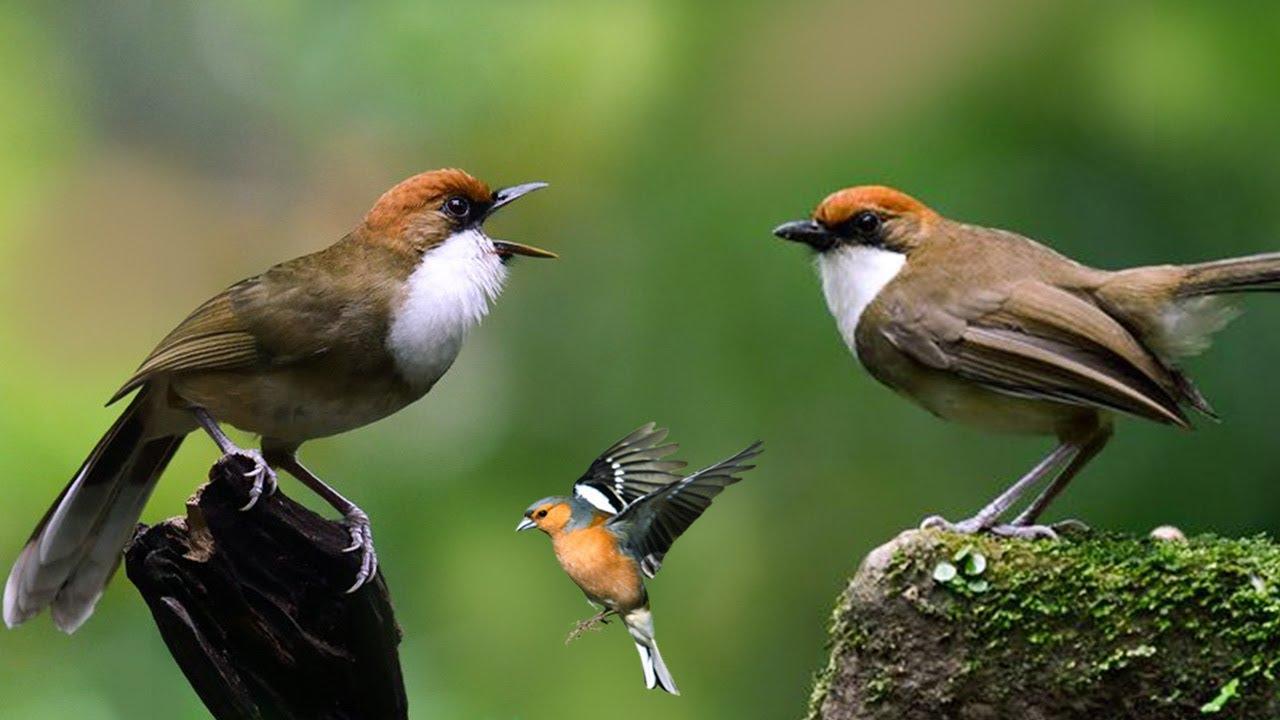 Makna Mimpi Burung