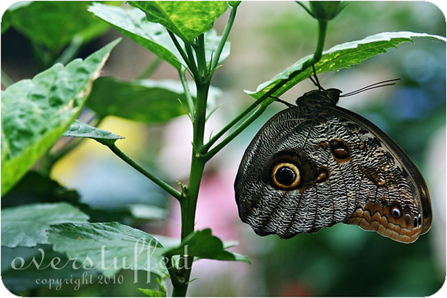 Butterfly House on Mackinac Island