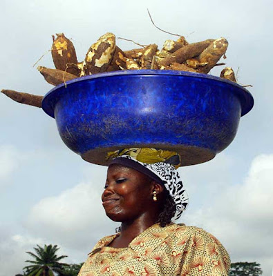 Harvesting cassava in Nigeria where tons food loss and waste happens