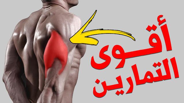 عضلات الترايسبس