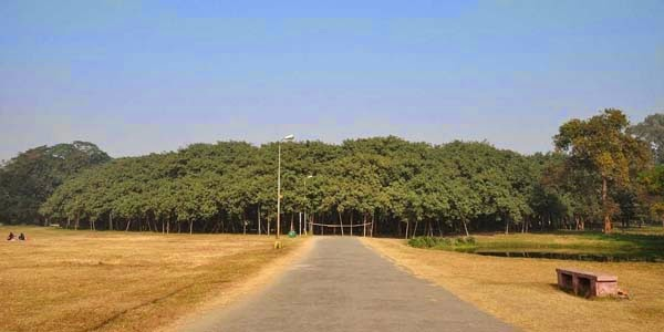 This may look like a forest, but it's just one tree. - In India, There Is A Gigantic Tree That Is Bigger Than A Walmart Store.