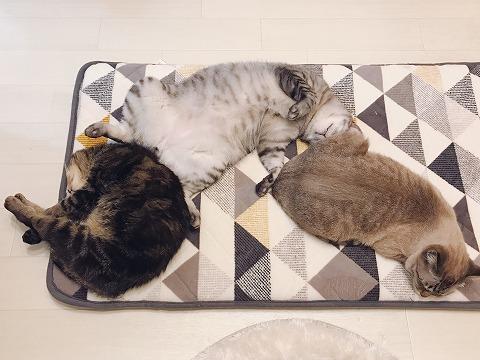 3匹それぞれの個性がわかる寝相