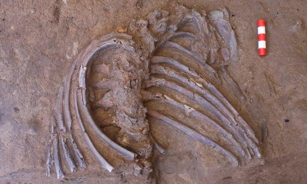 Θρηνούσαν οι Νεάντερταλ για τους νεκρούς; Γύρη σε σκελετό αποκαλύπτει ταφικά έθιμα