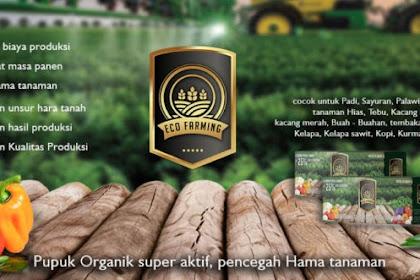 Eco Farming Pupuk Organik Tingkatkan Hasil Pertanian Dengan Signifikan