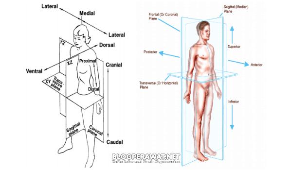 Sikap tubuh dan arah gerakan