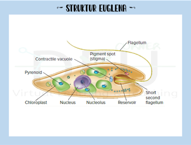 Struktur Euglenozoa