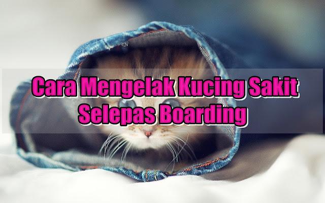 Cara Mengelak Kucing Sakit Selepas Boarding