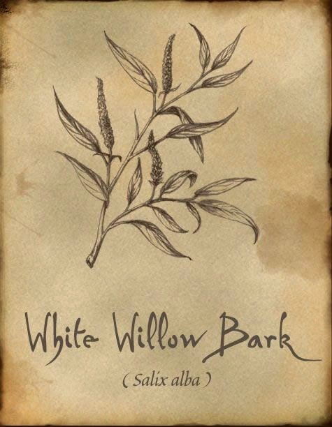 White willow bark ilustration