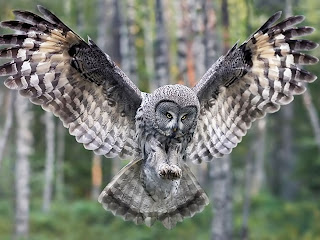 Owl | The Biggest Animals Kingdom