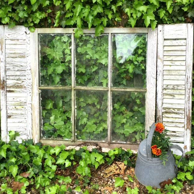 Old window with shutters in the ivy
