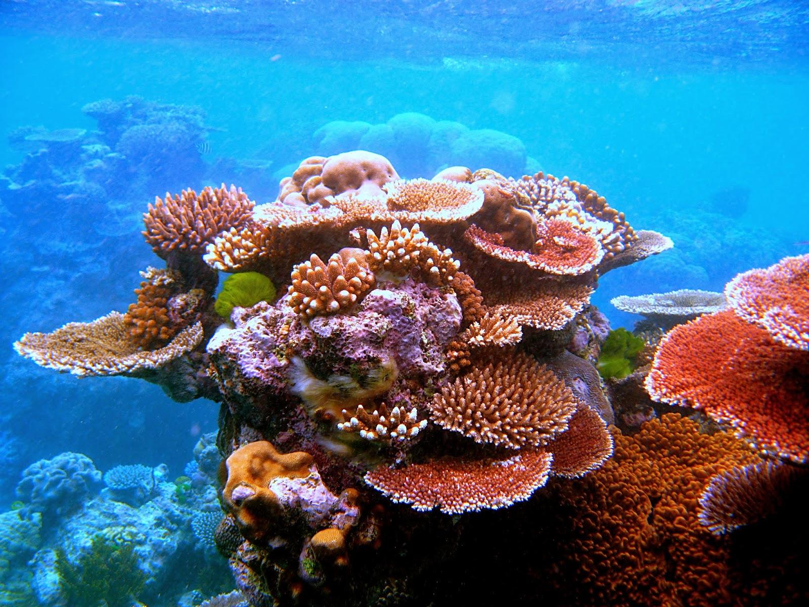 3 coral atada en una silla 2 - 3 9