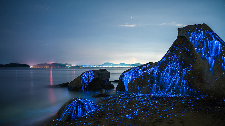 Ríos azules de camarón bioluminiscente chorrean sobre rocas en la orilla del mar en Okayama, Japón