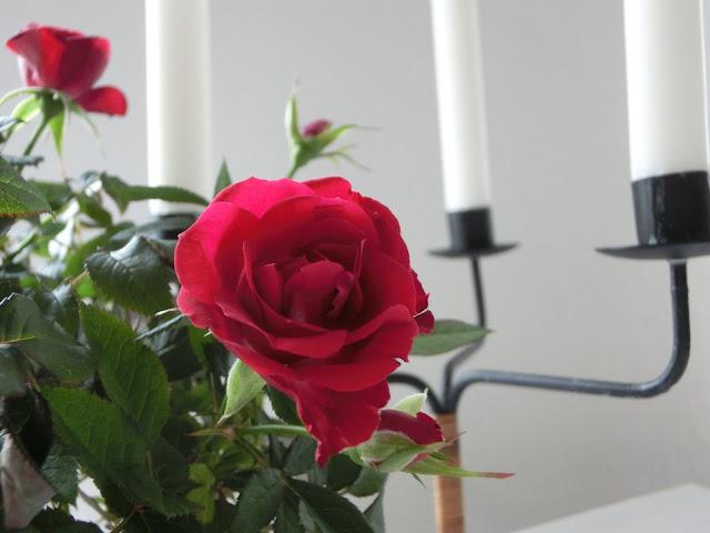 розы, уют в доме, хюгге, рустик