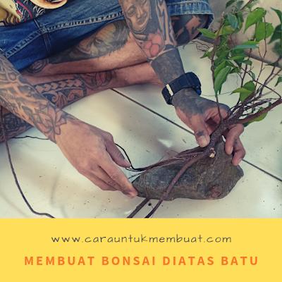 Membuat Bonsai Diatas Batu