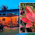 This plant shop in Kabankalan City every plantita should check out!
