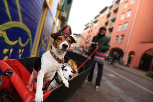 Resultado de imagen para sin animales en la calle