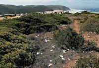 Wildcamping an der Algarve sorgt für zunehmende Verschmutzung