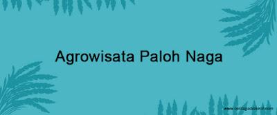 Travel Blogger Medan - Berwisata Alam Kekinian di Agrowisata Paloh Naga Hamparan Sawah