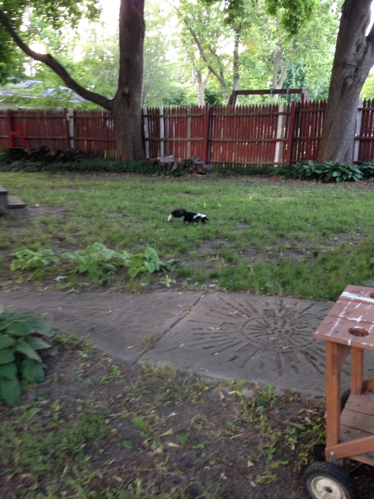 eastside cats a new yard cat