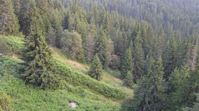 Θα πρασινίσουν ξανά 500.000 στρέμματα σε όλη τη χώρα με 30 εκατομμύρια δέντρα