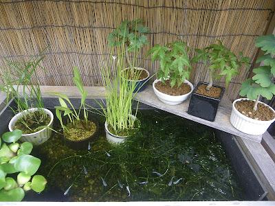 水草 ミニ盆栽