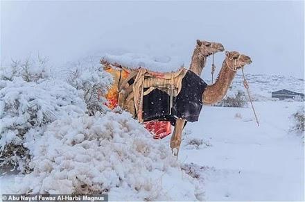 Χιόνισε στη Σαχάρα - Απίστευτες εικόνες (ΦΩΤΟ-ΒΙΝΤΕΟ)