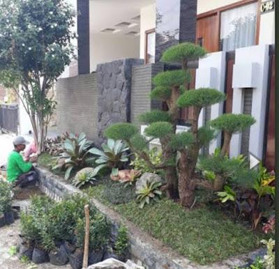 Tukang Taman Mangga Besar - SuryaTaman