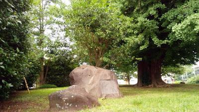 大塚神明社の樹齢500年の大木