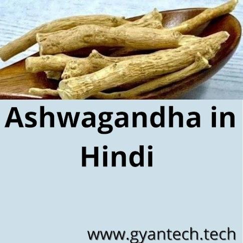 अश्वगंधा के फायदे  । Ashwagandha in Hindi । Benefits and Side Effects of Ashwagandha in Hindi