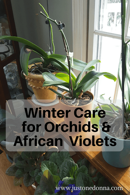 Caring for Orchids and African Violets in Winter