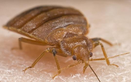 bbmax599 bug dec 2012