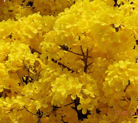 Hình Nền Màu Vàng Đẹp Của Cây Hoa Dại