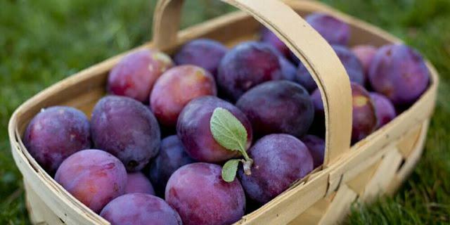 berapa kali sehari makan buah plum untuk diet