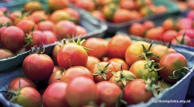 Kendala dalam Pengembangan Pertanian Organik