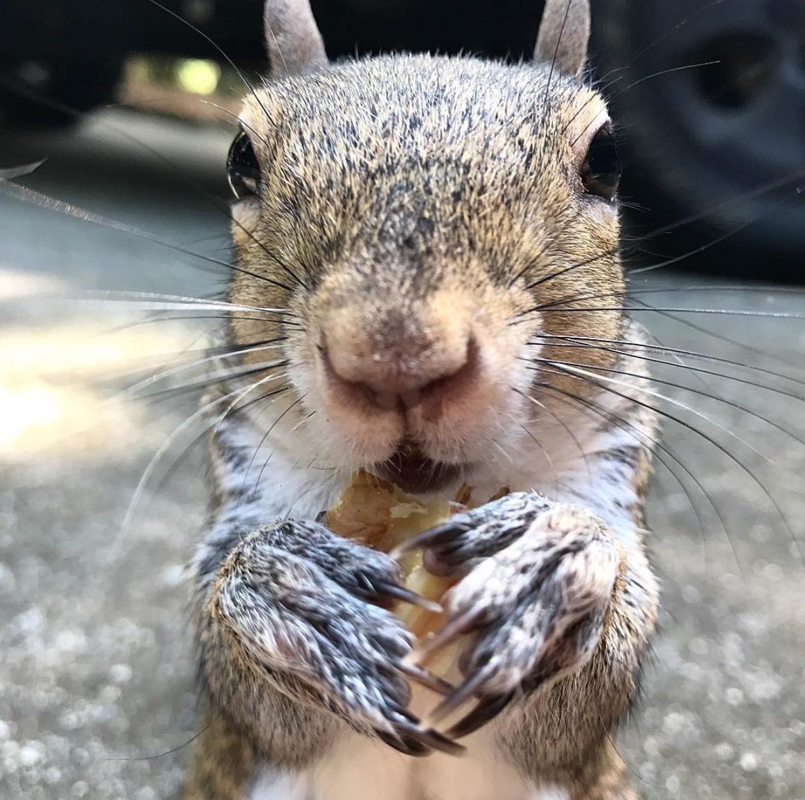 squirrel bella pregnant
