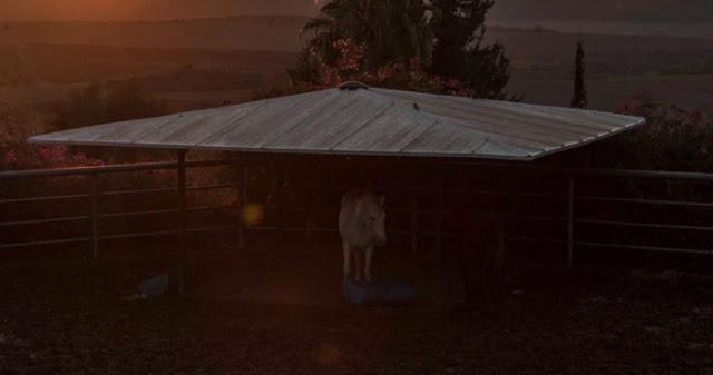 Care Animal Shelter Bangalore