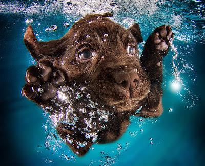 Fotografía de cachorro bajo el agua