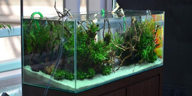 Harga Aquarium