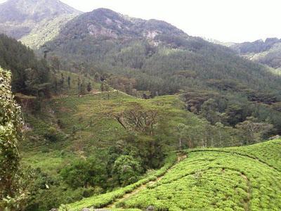Matale Riverstan in Sri Lanka
