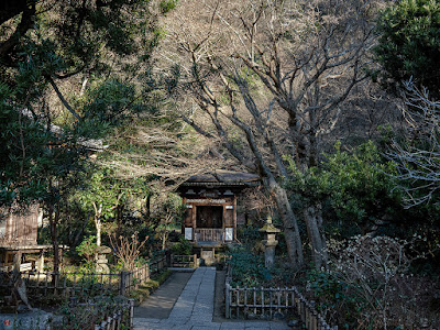 Winter garden: Engaku-ji