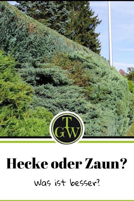 Hecke als natürlicher Sichtschutz und Lebensraum für Tiere im Gegensatz zu einem künstlichen Zaun #zaun #hecke #sichtschutz #lärmschutz - Gartenblog Topfgartenwelt