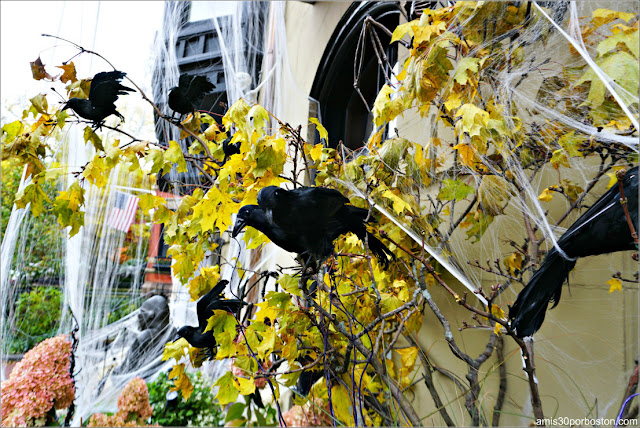 Decoraciones de Cuervos por Halloween en Back Bay, Boston