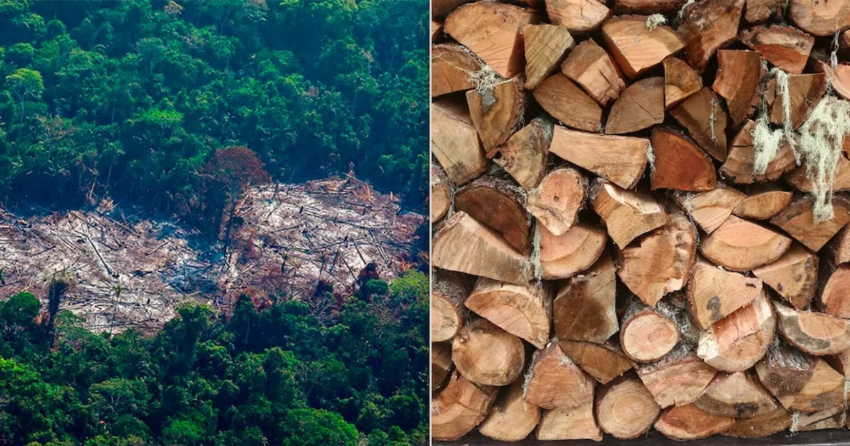 MIT Researchers Create Lab-Grown Wood That Could Save The Rainforests