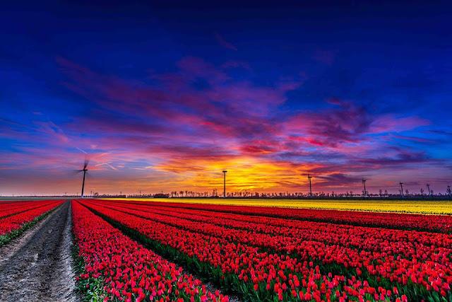 【荷比盧行程】2020 荷蘭比利時盧森堡行程規畫全指南: 行程建議/景點取捨/自駕注意事項 Holland Travel Plan - 荷蘭 ...