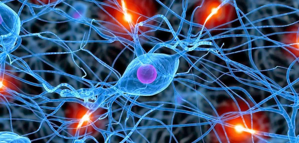Circuito Nervioso : Fisiología v el sistema nervioso biología