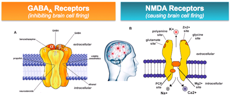 the role of gaba and nmda Start studying chapter 8 - glutamate and gaba learn vocabulary, terms, and more with flashcards, games, and other study tools search create log in sign up ampa and nmda receptors play role in learning and memory cog enhancers: ampakines.