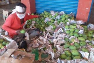 mango-will-be-coastly-in-jamhsedpur