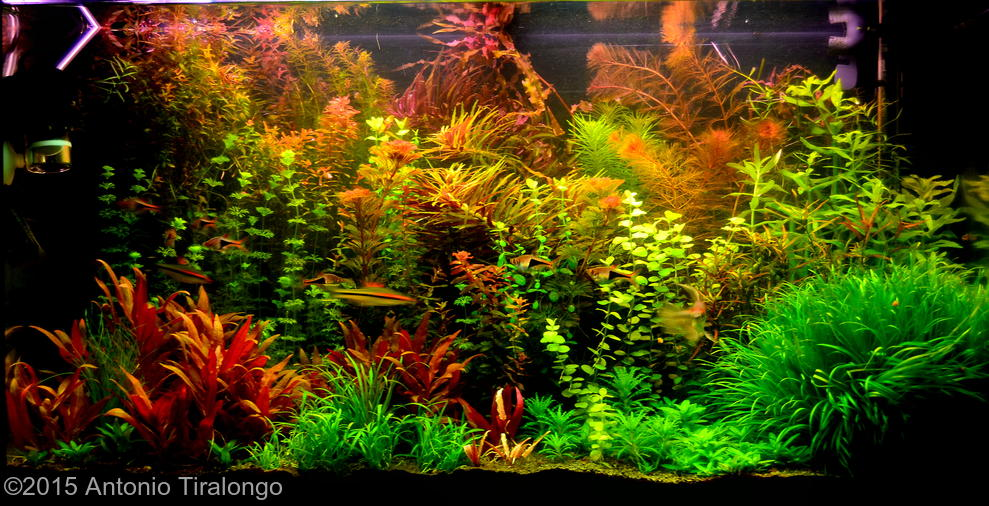 Dutch Aquascapes