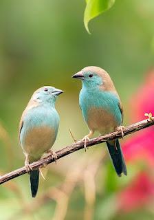 वह चिड़िया जो