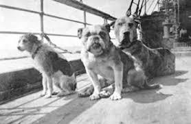 cães no titanic